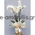 Λευκή ορχιδέα ''φαλαίνοψις'' σε λευκό κασπό